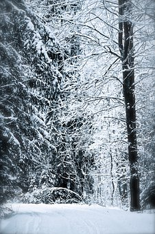 Fairytale, Forest, Snow, Winter, Trees, Tree, Cold