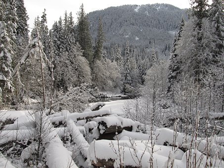 Snowscape, Winter, Winter Creek, Cold, Icy, Frozen