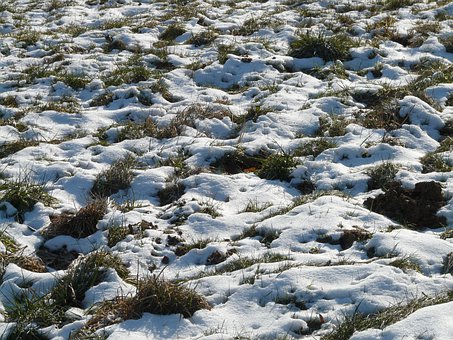 Meadow, Field, Snowy, Snow, Winter, Cold, Frosty