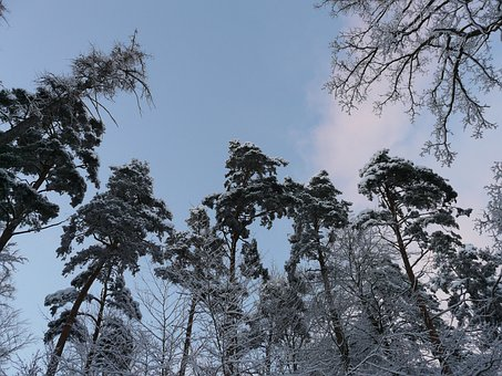 Trees, Forest, Top, Sky, Snowy, Winter, Wintry, Snow