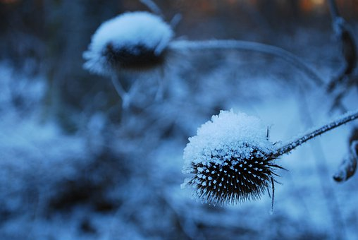 Winter, Blue, Snow, Cold, Rest, Snowy, Ice, Bud, Frozen