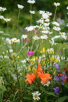 Nature, Flower, Macro, Leaf, Background, Flowers, Plant