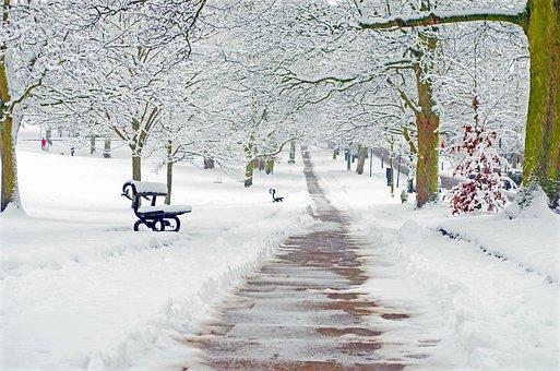 Snowy, Snow, Snowed, Seasons, Branch, Branches, Winter