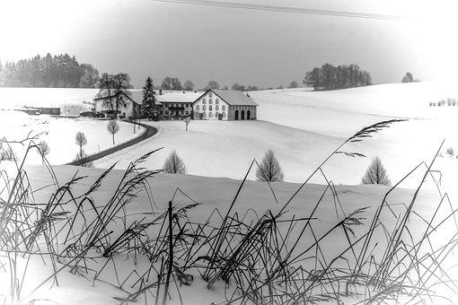 Winter, Wintry, Snow, Snowy, Landscape, Farm