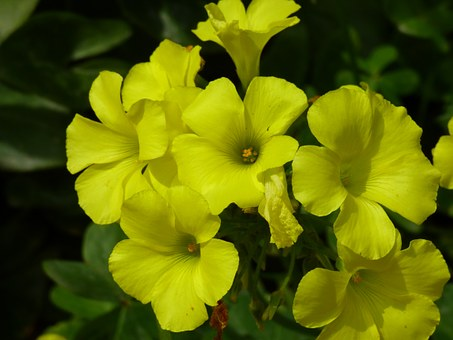 Yellow, Meadow, Outdoor, Flower, Spring, Malta, Island