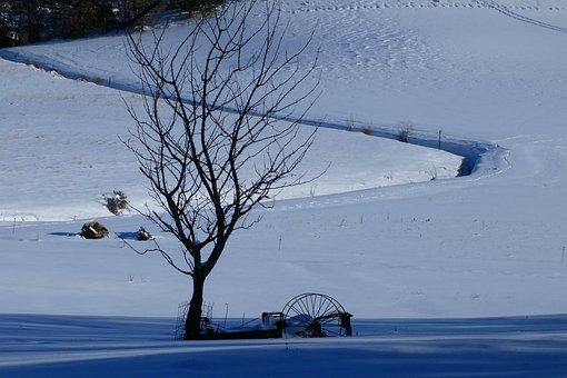 Landscape, Winter Scenery, Snow, Tree