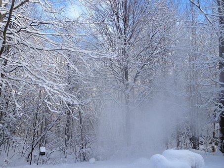 Winter, Snow, Windy, Winter Magic, Scenic, Snowy