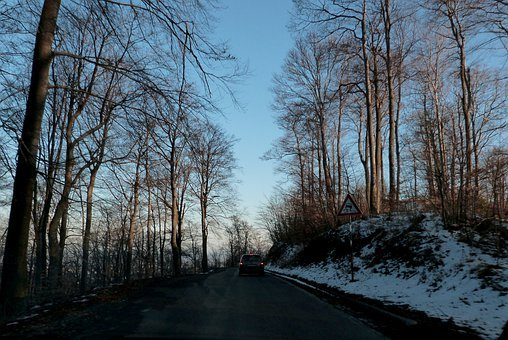 Woods, Trees, Roads, Winter, Snowy, Lands, Grounds