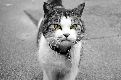 Animal, Attention, Background, Cat, Character