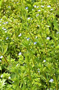 Wild Flowers, Spring, Green, Blue, Layer Upon Layer Of