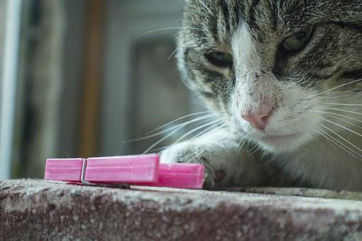 Cat, Playful, Cute, Snow, Kitten, Lovable, Charming