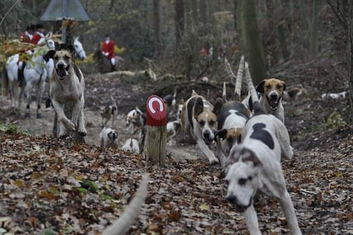 Dog, Hunting, Dogs, Forest, Drag