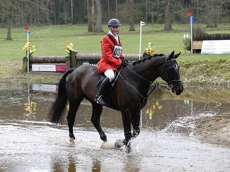 Horse, Rider, Fox, Hunting, Horses, Drag, Mold, Nature