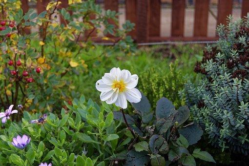 Flower, White Flower, Nature, White, Plant, Autumn