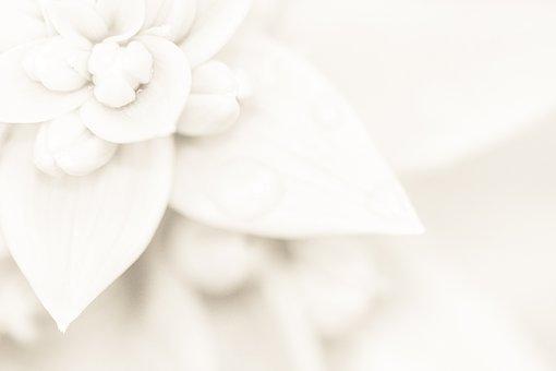 Light, Wedding, Lily, Background, Flower, Pattern