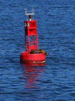 It, Seal, Bay, San Diego, Bouy