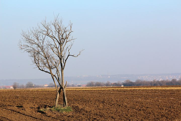 Tree, Landscape, Nature, Soil, Ground, Sky, Agronomy