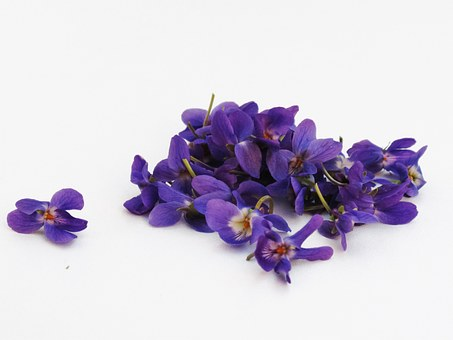 Violets, Flowers, Violet, Background, White
