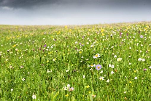 Flower, Wild Flower, Spring, River, Grassland, Prairie