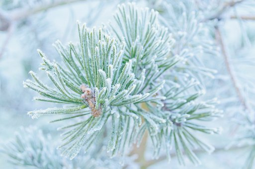 Winter, Frost, Snow, Nature, Macro, Wallpaper