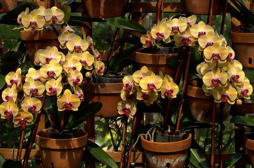 Orchids, Blooms, Flowers, Botanical, Gardens, Atlanta