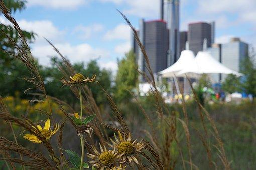 Wild Flowers, Detroit, Flowers, Foilage, Nature