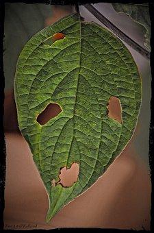 The Scream, Edvard Munch, Munch, Art, Leaf, Leaves