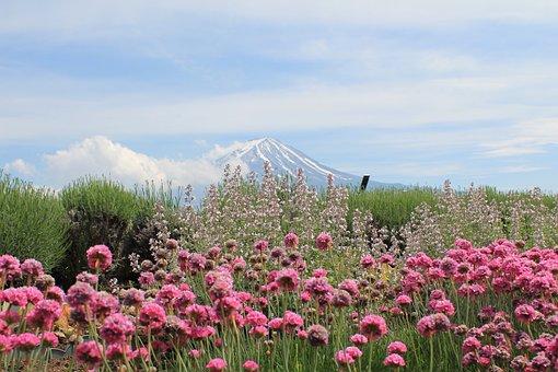 Japan, Mount Fuji, Fujisan, Fuji San, Flower, Nature