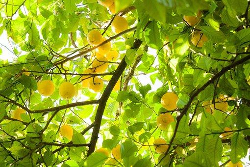 Summer, Lemons, Yellow, Citron, Citrum, Light
