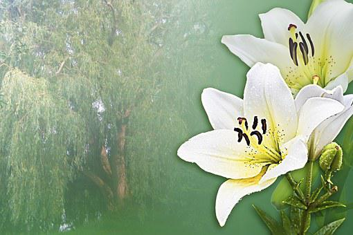 Lilies, Dream, White, Poem, Relax, Rest, Relaxation