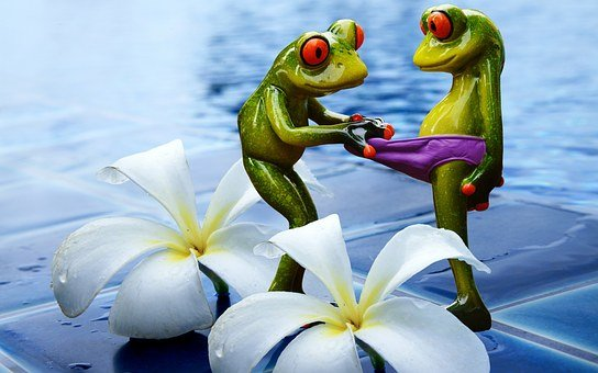 Frogs, Curious, Funny, Swimming Pool, Figures, Cute