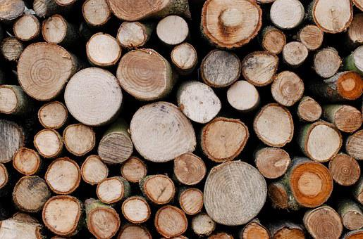 Trees, Lumber, Timber, Wood, Wooden, Material, Nature