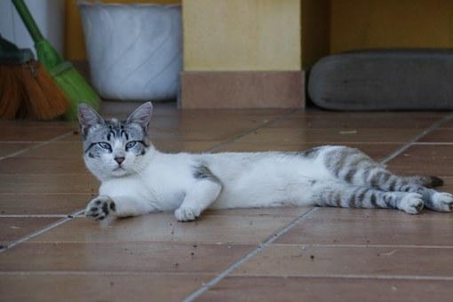 Cat, Laziness, Rest, Kitten, Feline, Animal