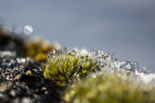 Hoarfrost, Moss, Winter, Snow, Cold, Transition, Autumn