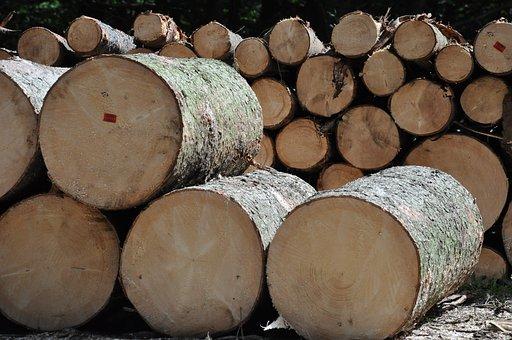Wood, Tree, Sawmill, Fathom, Production, Forest, Slice