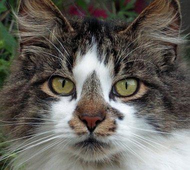 Cat, House Cat, Cute, House, Animal, Feline, Kitten