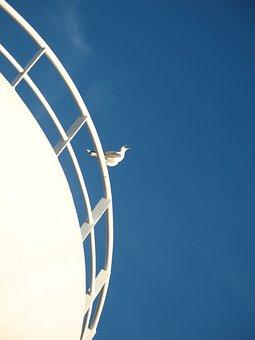 Gull, Gape, Himmel, Archipelago, Boat, Sweden, Sky Blue