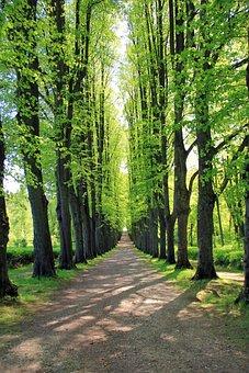 Avenue, Tree, Trees, Away, Road, Nature, Bomberg