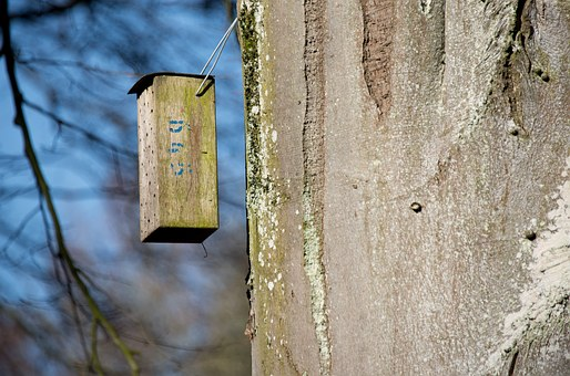 Aviary, Tree, Log, Hatchery, Nest, Breed, Nesting Place