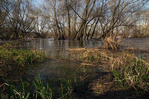 Rhine, River Floodplain, High Water, Spring, Riverside