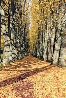 Autumn, Away, Avenue, Bomberg, Leaves, Walk, Trees