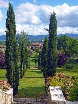 Italy, Tuscany, Avenue, Cypress