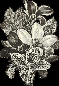 Flowers, Transparent, Beige, Bouquet, Plant
