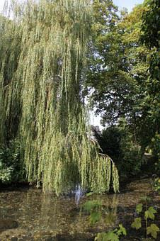 Tree, Lake, Summer, Country Side, Willow, Willow Tree