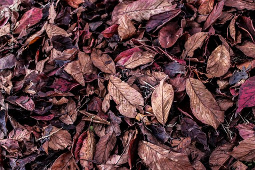 Leaves, Autumn, Fall Colors, Dry Leaf, Nature, Dry Tree