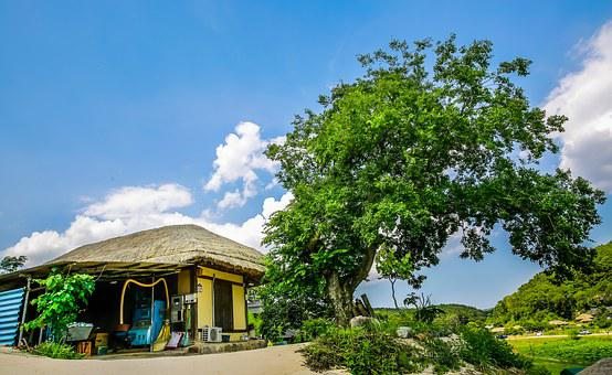 The House, Ancient Tree, Green, History, The Tradition