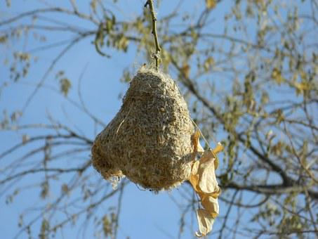 Nightingale's Nest, Amin, Willow Tree