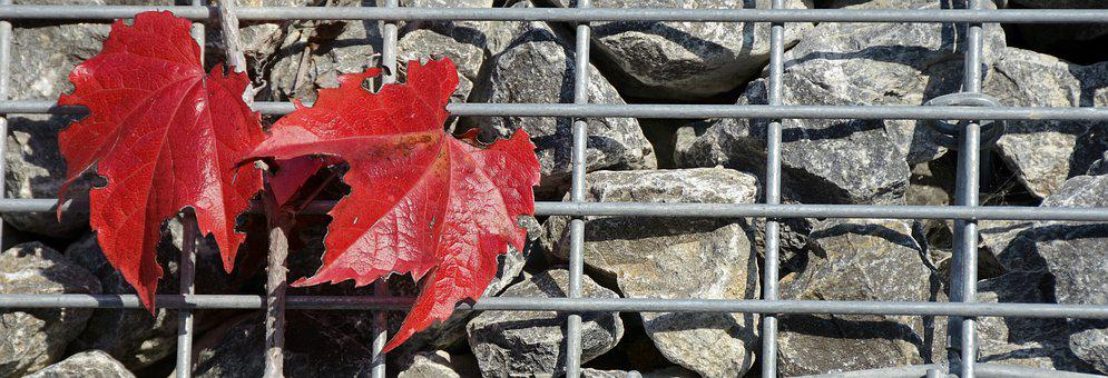 Wine Partner, Autumn Colours, Autumn, Fall Color