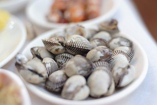 Shell, Cockle, Beolgyo, Clam