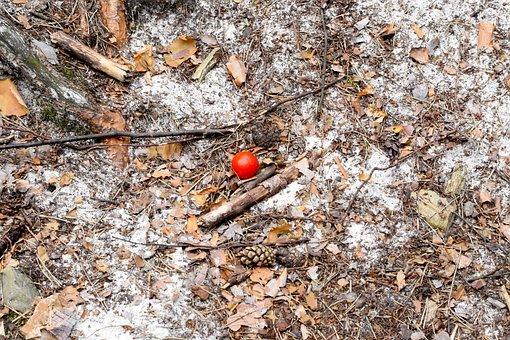 Tomato, Rest, Picnic, Ground, Sand, Nature, Dry, Close